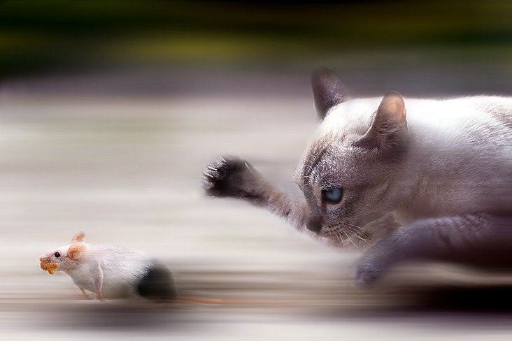 Run!!