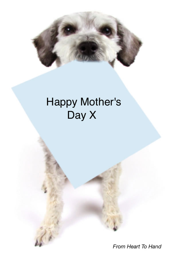Mother doesn't want a dog for Mother's day